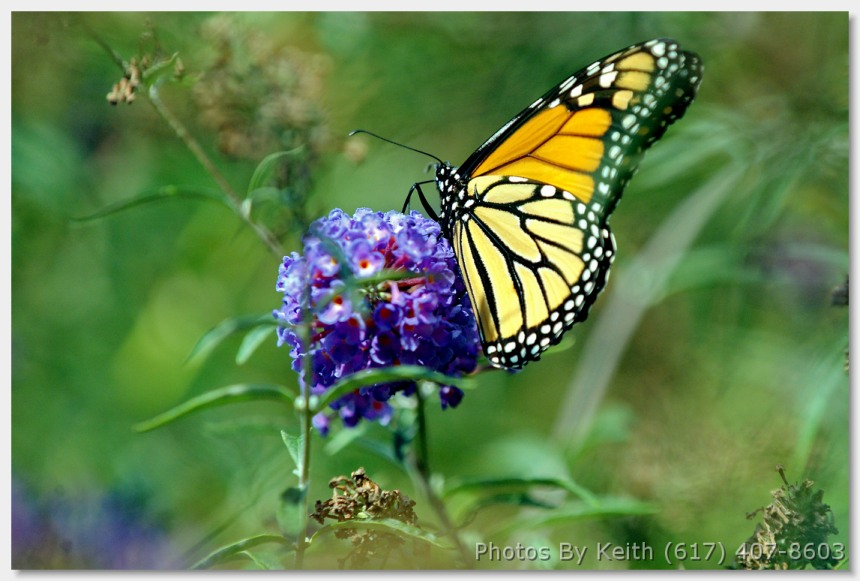 Photo - See more at http://colorsphotography.com/butterflymeadow/