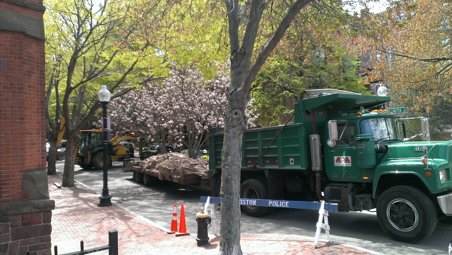 Photo - Magnolias arrive